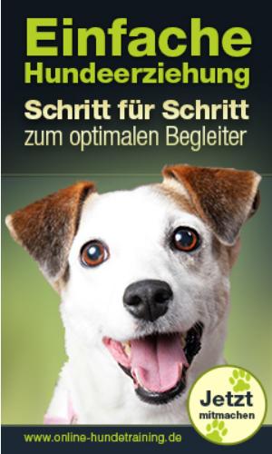 Online Hundeerziehung