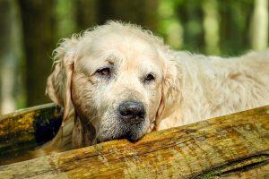 Alte Hunde brauchen eine isolierte Hundehütte